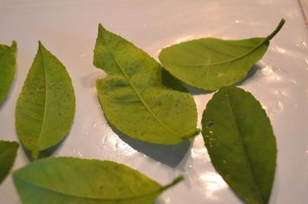 Почему облетают листья у лимона в домашних условиях